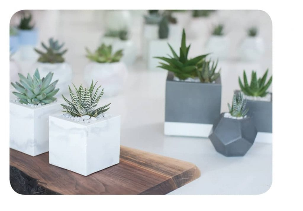 HAND CRAFTED CONCRETE. These beautifully handcrafted vessels (with wee succulents) are available in a variety of sizes, shapes and colours.